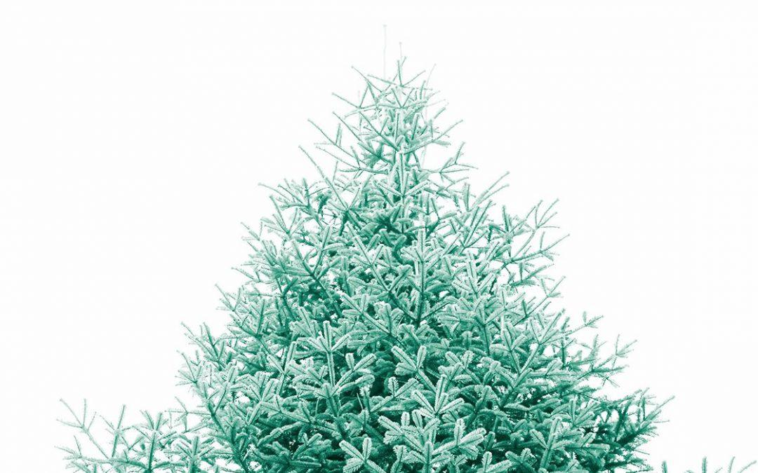 Commande de sapin de Noël